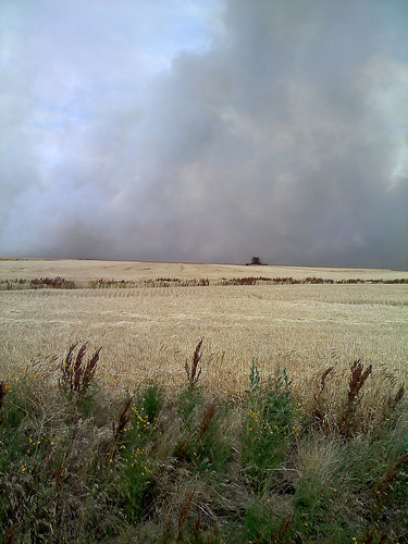A combine rushes around a fire cutting wheat as it goes