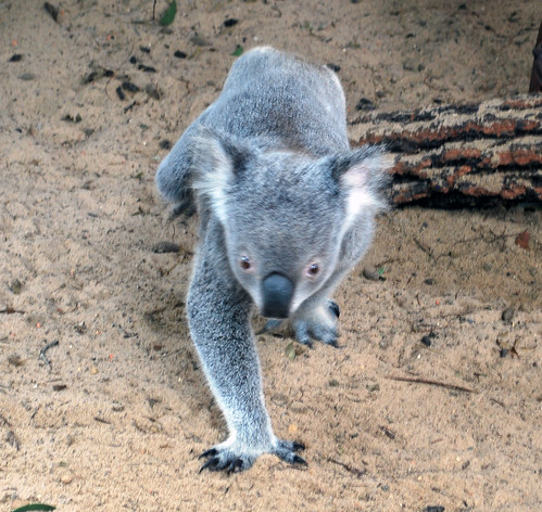 Australia_66