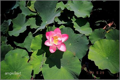 b-20090529_natura114_018.jpg