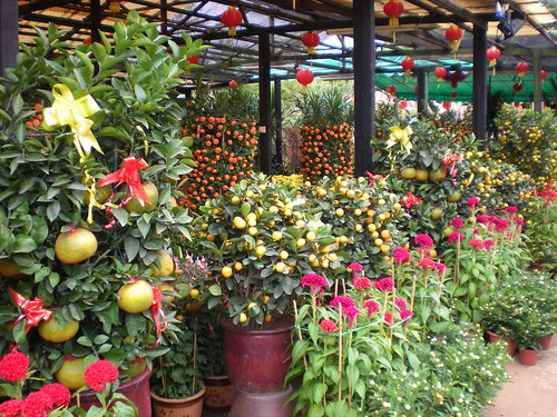 Chinese New Year Flowers Market (9)