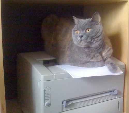 Lucy Cat - loves her sleeping spots