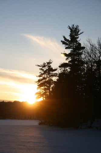 White Pines at sunset