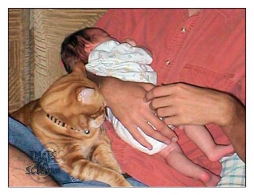 Protective Pet