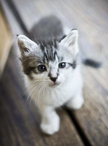 A Look of Curiosity