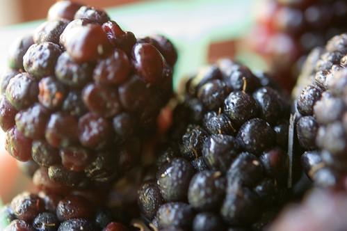 05.20.2009: blackberries! (by bookgrl)