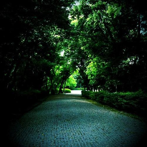 今日は、お茶会の後、橿原神宮を参ってきたんだけど、樹々に包まれて、久々に森林浴したなぁ~と。みなさんにも、ちとおすそ分け! 今日も一日、お疲れ様でした。 #night
