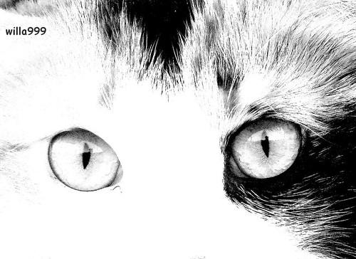 I tuoi occhi.....
