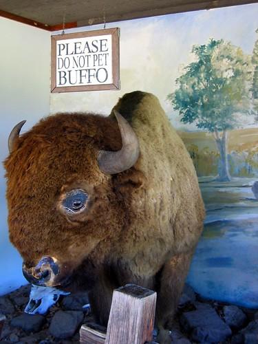 Trash-eating buffalo.