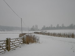 Winter view from Gorhambury walk at Maynes farm