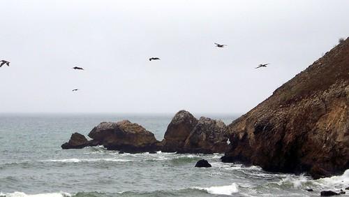 Pacifica coast (wide) (with birds)