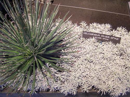 Cool plant combo