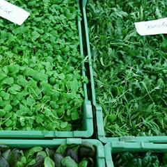 Mein Biogärtner 8_2009 02 13_8458