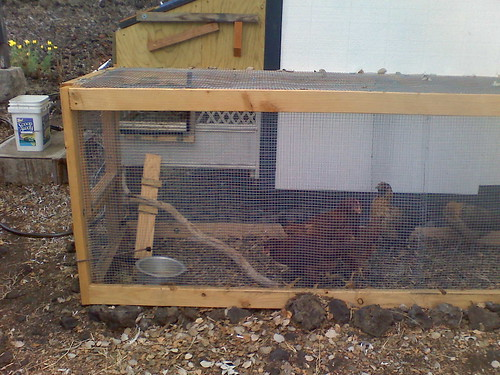 COMPLETED CHICKEN RUN