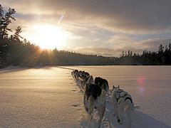 Dog sled trip heading towards Aspen Lake