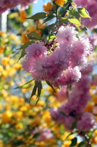Gorgeous blossoms in the garden