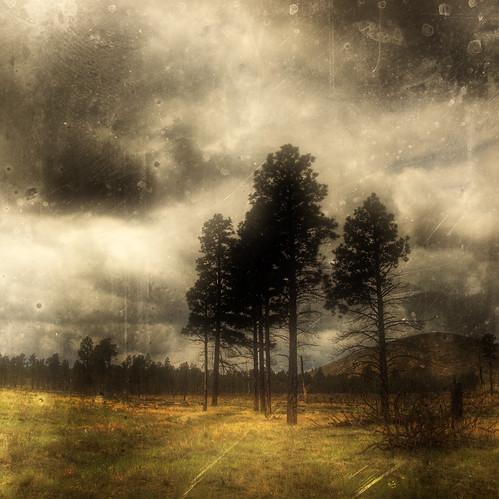 "Photo credit: ""Black Pines"" by Eric Vondy"