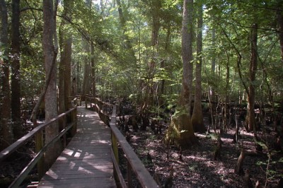 Beidler Forest Boardwalk