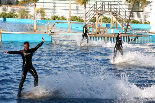 Dolphin Show at L'Oceanografic