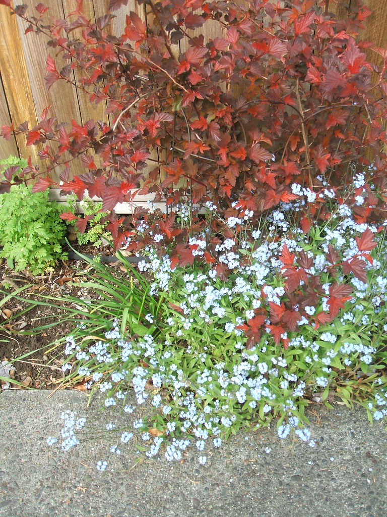 Forget-me-nots & ?