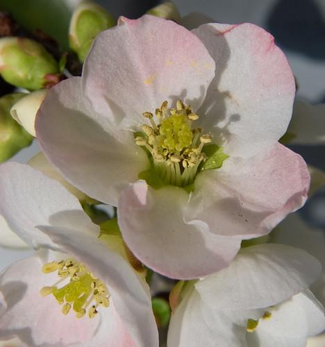 Satin Spring