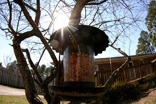 backyard_feeder030809