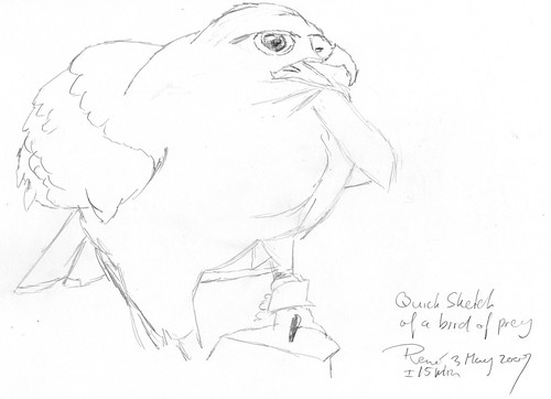 Bird-of-prey-002