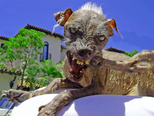 Featured : Catlike dog that resembles an overgrown Rat - Resident Evil Included ;)