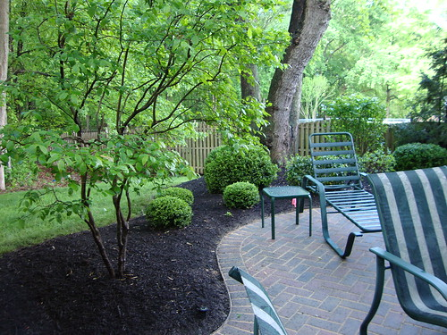 Spring Cleanup:  Patio & Tree Area