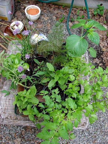 finally, plants