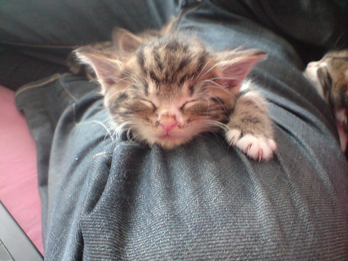 Asleep on Gwilyms leg