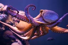 Octopus dance