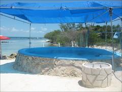Un des bassins de la Tortugranja