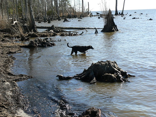 Camden - Jimmie Wades in River