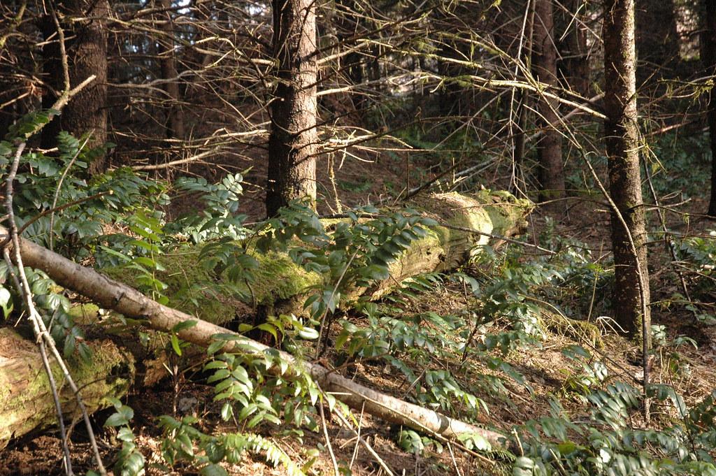 Stubs Stewart State Park