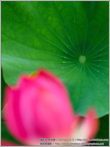 2009 夏荷 - 松濤園