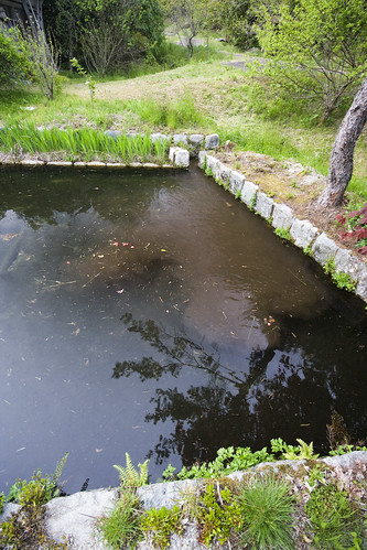 Rice water, step 3. flowing into the fish pond.
