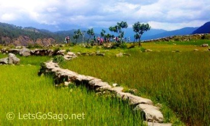 Sagada Level Rice Fields