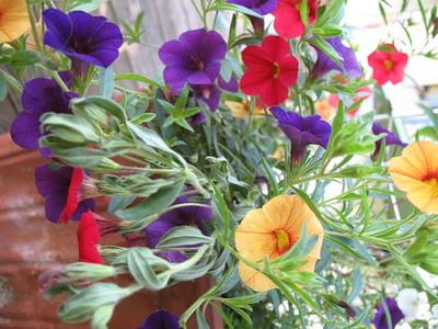 Garten_22.05.11_004_klein