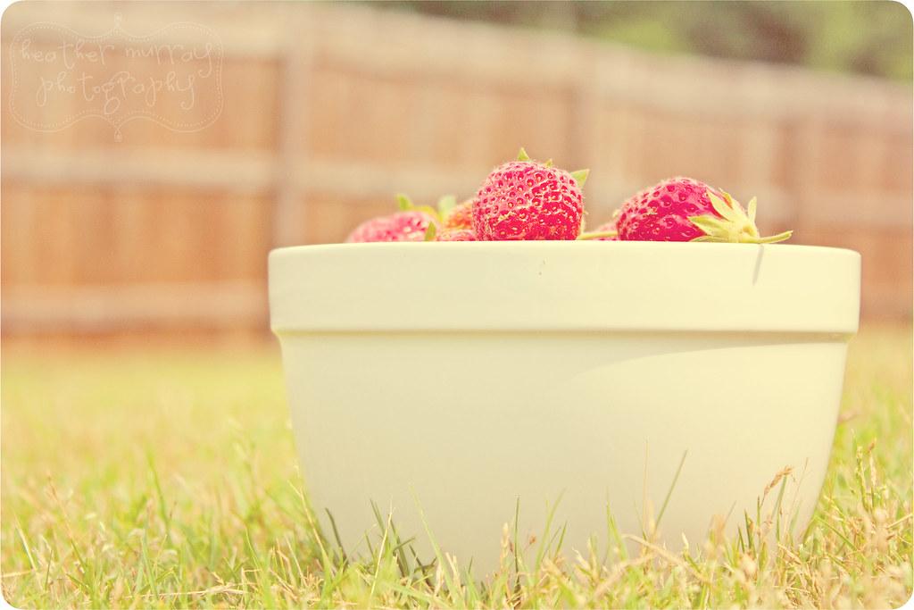 strawberries6