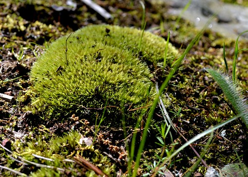 fluffy rock