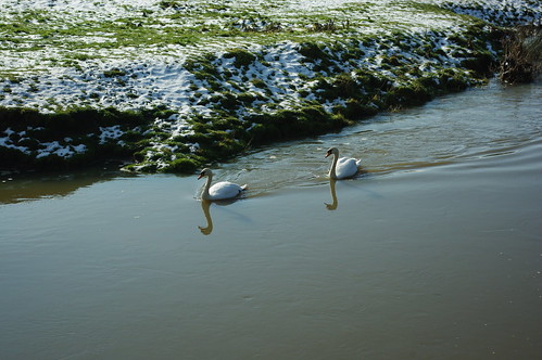 20100220-21_Pair of swans on The River Avon - Wolston by gary.hadden
