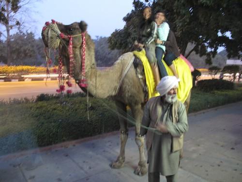 suckey camel's #^$*!