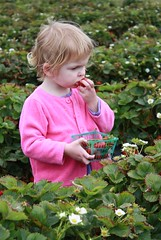 Claire eating strawberries she is supposed to be picking