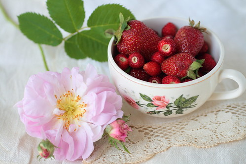 Rose and strawberries