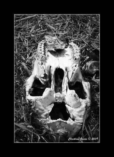 "Muerte en el Campo • <a style=""font-size:0.8em;"" href=""http://www.flickr.com/photos/20681585@N05/3425766348/"" target=""_blank"">View on Flickr</a>"