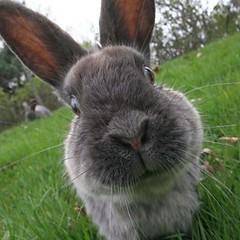 a Uvic bunny