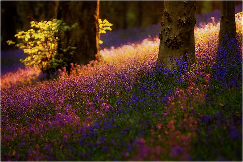 Shadows and Light - A Woodland Scene by andrewwdavies