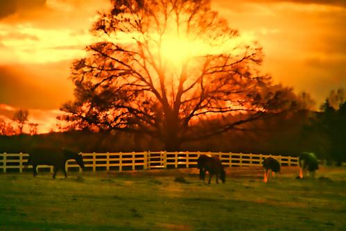 Equine Sunset