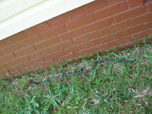 it is a snake