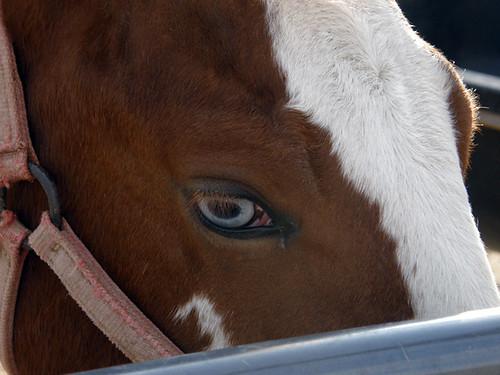 One blule eye